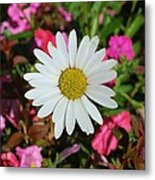 Daisy And Pink Flowers Metal Print