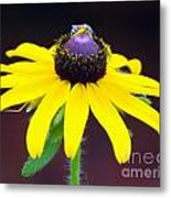 Daisy And The Blue Bug Metal Print