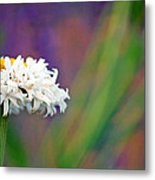 Daisy At Attention Metal Print