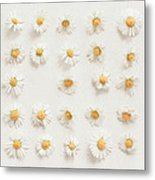 Daisy Collection Metal Print