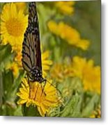 Daisy Daisy Give Me Your Anther Do Metal Print