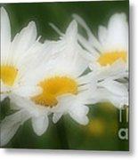 Daisy Flower Trio Metal Print