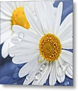 Daisy Flowers With Water Drops Metal Print