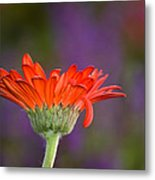 Daisy For Monet Metal Print