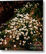 Daisy - Give Me Your Answer Do Metal Print