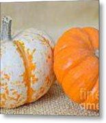 Daisy Gourd And Pumpkin Metal Print