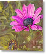 Daisy In Pink Metal Print