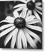 Daisy In The Dark Metal Print