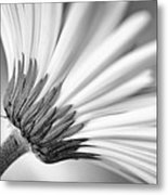 Daisy Noir Metal Print by Christi Kraft