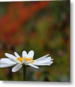 Daisy Metal Print by Old Pueblo Photography