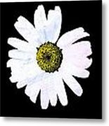 Daisy On Black Metal Print