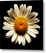 Daisy On Black Square Fractal Metal Print