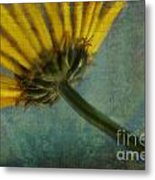 Daisy Reach Metal Print
