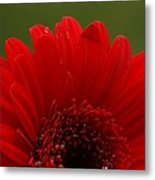 Daisy Red Metal Print