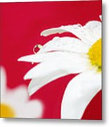 Daisy Reflecting On Red V2 Metal Print