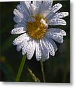 Daisy Metal Print by Scott Gould