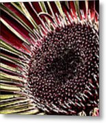 Daisy Unleashed Metal Print