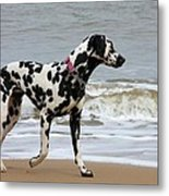 Dalmatian By The Sea Metal Print