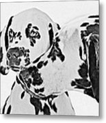 Dalmatians - A Great Breed For The Right Family Metal Print