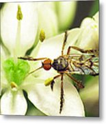 Dancefly On Onion Flower Metal Print by Walter Klockers