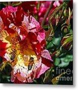 Dancing Bees And Wild Roses Metal Print