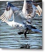 Dancing Swan Metal Print
