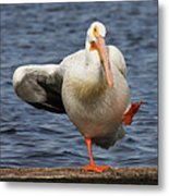 Dancing The Funky Chicken Metal Print