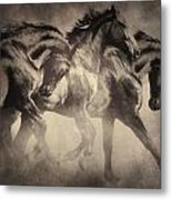 Dancing With Stallions Metal Print