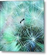 Dandelion Ant Metal Print by Candice Trimble