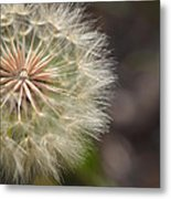 Dandelion Art - So It Begins - By Sharon Cummings Metal Print