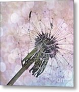 Dandelion Before Pretty Bokeh Metal Print