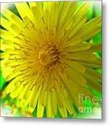 Dandelion Blossom Metal Print