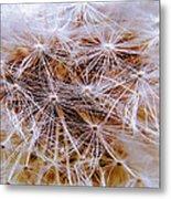 Dandelion Closeup Metal Print