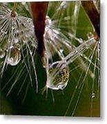 Dandelion Droplets Metal Print