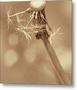 Dandelion Last To Fly Away Sepia Metal Print