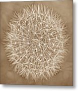 Dandelion Marco Abstract Brown Metal Print