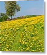 Dandelion Meadow And Alone Tree  Metal Print