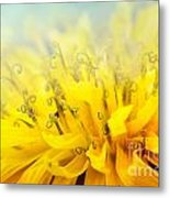 Dandelion  Metal Print by Mythja  Photography