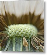 Dandelion Seed Macro Metal Print