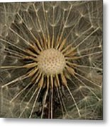 Dandelion Seed Pod Metal Print by Elery Oxford
