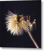 Dandelion Shaken By The Wind Metal Print