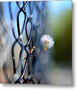 Dandelion Wish Metal Print