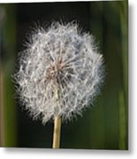 Dandelion With Abstract Grasses Metal Print