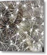 Dandillion Seed Head 2 Metal Print
