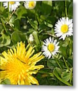 Dandy With The Daisies Metal Print