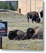 Danger Do Not Approach Wildlife Metal Print