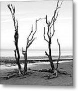 Dancing Trees Metal Print by Thomas Leon