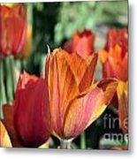 Darby's Tulip 5161 Metal Print