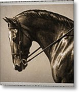 Dark Dressage Horse Old Photo Fx Metal Print by Crista Forest