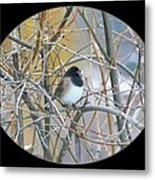Dark- Eyed Junco Metal Print